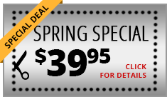 special deal spring special click for details